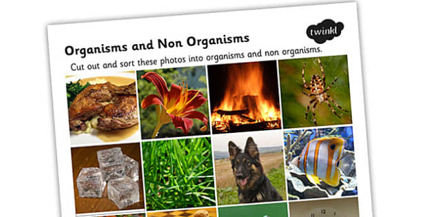 Organisams and Non Organisms Photo Sorting Activity - living things, organisms, organisms sorting activity, organisms photo sorting activity, ks2 science