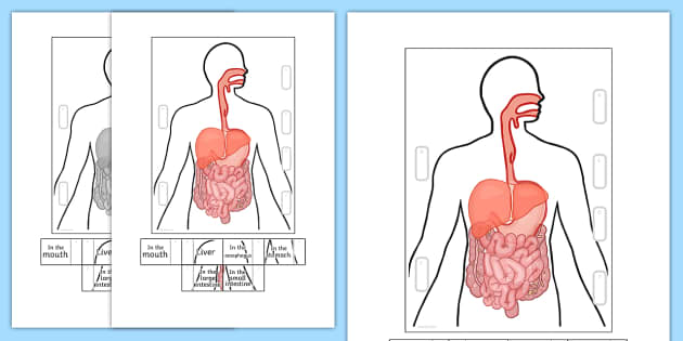 Digestive System Interactive Visual Aid - eating, food, body