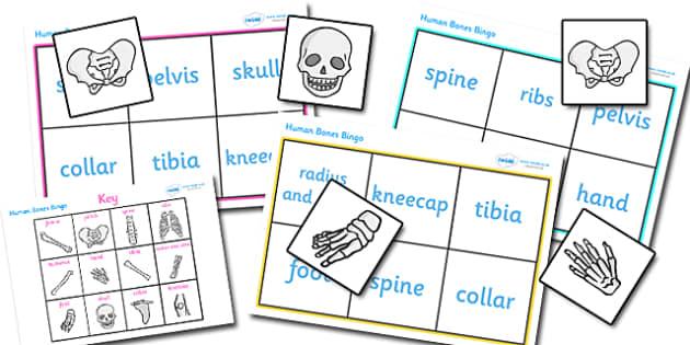 Bones of the Body Bingo - bones of the body bingo, bones, body, human body, human skeleton, bingo, game, activity, skull, hands, ribs, kneecap