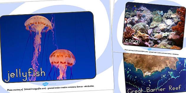Great Barrier Reef Display Photos - australia, barrier, reef