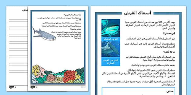 نشاط سمك القرش شامل متمايز للقراءة والفهم