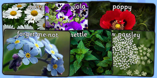 Wild Plants Display Photos - wild plants, display, photo, photos