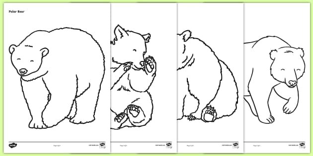 Bears Colouring Sheets -  Bears, bear, colouring, fine motor skills, poster, worksheet, animals, polar bear, koala bear, brown bear, grizzly bear, sloth bear,  bear resources