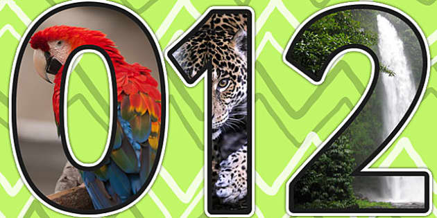 The Rainforest Themed A4 Photo Display Numbers - rainforest