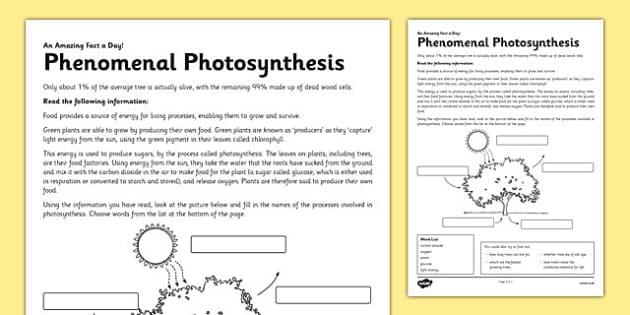 Phenomenal Photosynthesis Activity Sheet - photosynthesis, green plant, tree, energy, reading, label, worksheet