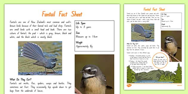 New Zealand Native Birds Fantail Fact Sheet - nz, new zealand, Native, birds, animals