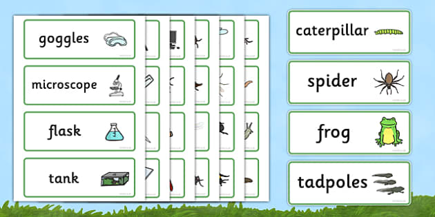 Minibeasts Investigation Lab Role Play Word Cards - Minibeasts, minibeast, investigation, lab, role play, word cards, flashcards, knowledge and understanding of the world