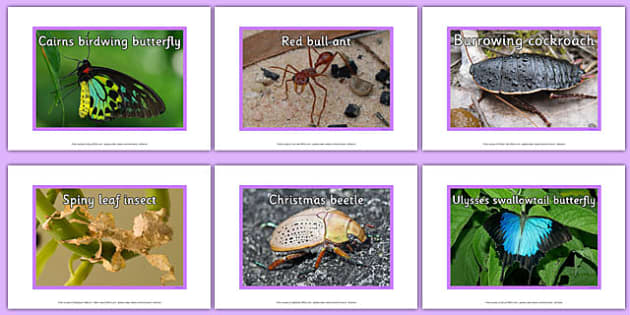 Australian Insects Display Photos - australia, animals, insects, display photos, display