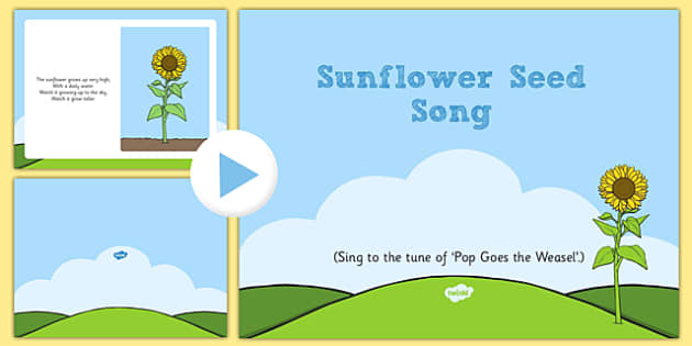 Sunflower Seed Song PowerPoint