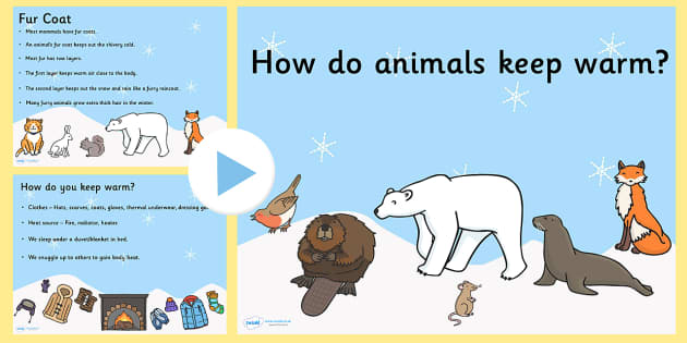 How Do Animals Keep Warm PowerPoint - how do animals keep warm, animal, powerpoint, information powerpoint, discussion prompt, class discussion, discussion