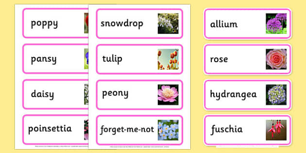 Garden Flowers Photo Word Cards - flowers, flowers word cards, flower word cards, plant word cards, garden centre role play, garden role play