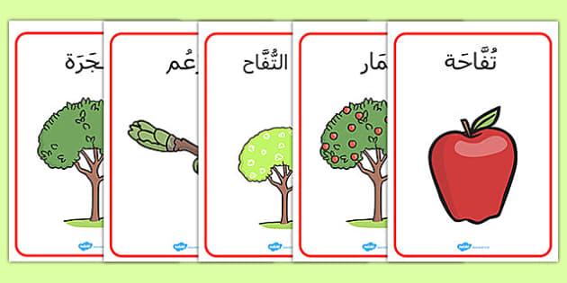 لوحات دورة حياة شجرة التفاح - نباتات، أشجار، نمو، تشجير، موارد