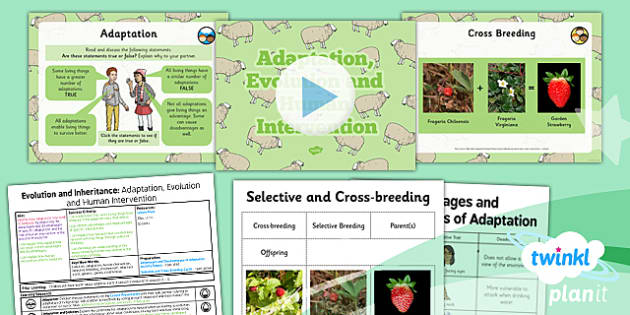 PlanIt - Science Year 6 - Evolution and Inheritance Lesson 6: Adaptation, Evolution and Human Intervention Lesson Pack - planit