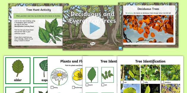 Deciduous and Evergreen Trees Task Setter Powerpoint and Activity Pack - deciduous, evergreen, trees, task seter, powerpoint, task setter powerpoint, pack