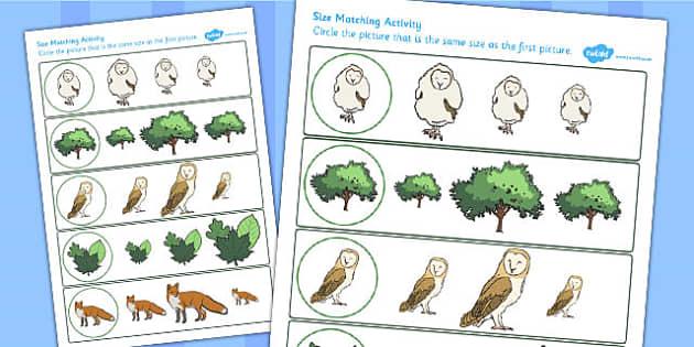 Owl Size Matching Worksheet - owl, size matching, worksheet