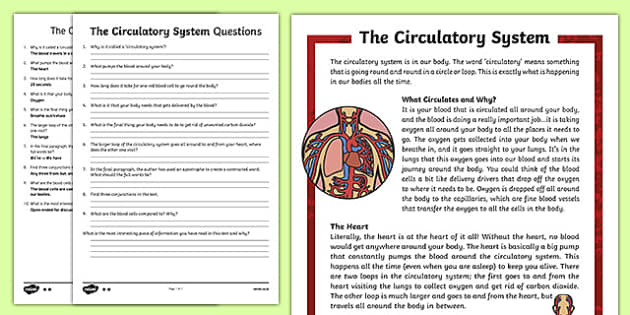 The Circulatory System Differentiated Reading Comprehension Activity