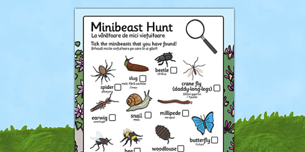 Minibeast Hunt Sheet Romanian Translation - romanian, Minibeast hunt, minibeast investigation, finding minibeasts, Minibeasts, Topic, Foundation stage, knowledge and understanding of the world, investigation, living things, snail, bee, ladybird, butt
