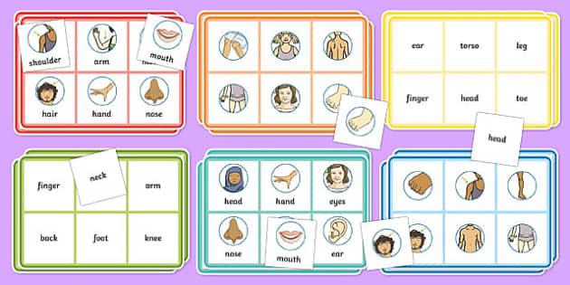 Body Bingo - body, bingo, skeleton, organs, parts, class, activity
