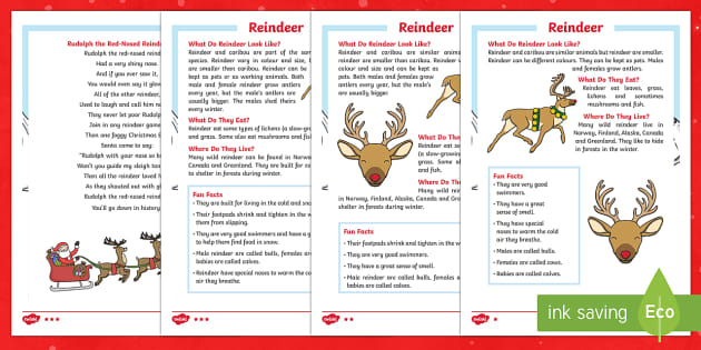 KS1 Reindeer Differentiated Fact File - Christmas, xmas, Xmas, Father Christmas, Santa, celebration, reindeer, Rudolph, event, reading, fact