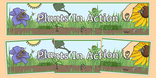 Plants In Action Display Banner - australia, Australian Curriculum, Plants in Action, science, year 4, banner, wall display