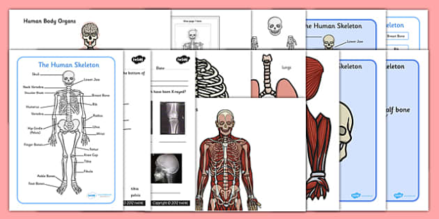 Human Skeleton Resource Pack - resource pack, pack, skeleton