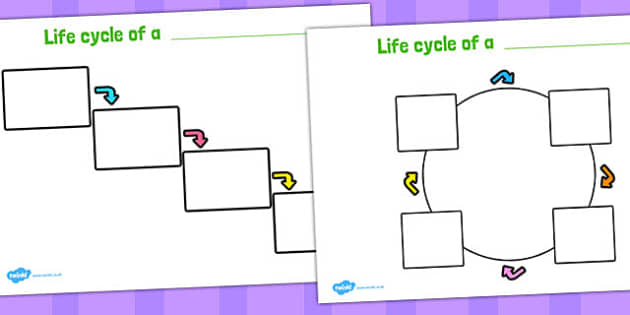 Editable Lifecycle Worksheets - life cycle, lifecycles, worksheet
