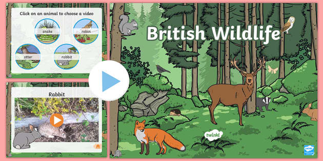 British Wildlife Video PowerPoint - wildlife, wildlife powerpoint, wildlife videos, british wildlife, british wildlife videos, british wildlife powerpoint