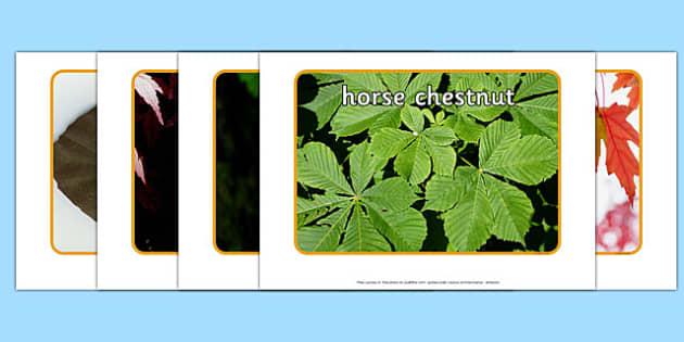 Leaves Display Photographs - autumn, winter, summer, spring, seasons, nature, science, change, display, visual aid, ks1, ks2, early years,