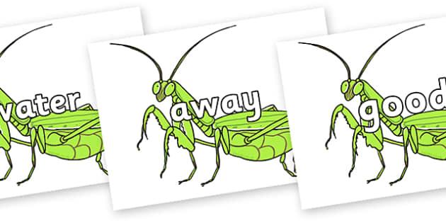 Next 200 Common Words on Praying Mantis - Next 200 Common Words on  - DfES Letters and Sounds, Letters and Sounds, Letters and sounds words, Common words, 200 common words