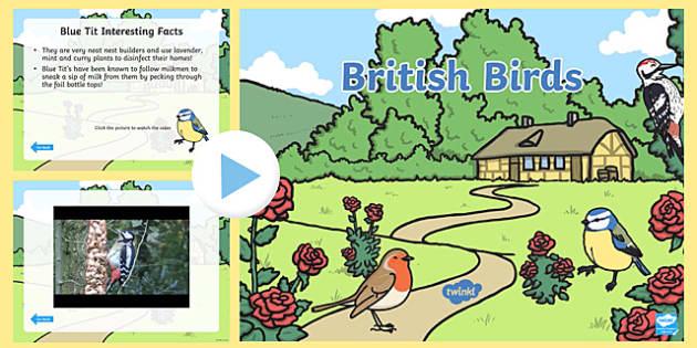 British Birds Video PowerPoint - birds, british birds, british birds powerpoint, birds powerpoint, bird videos, british bird videos, *video* video, robin
