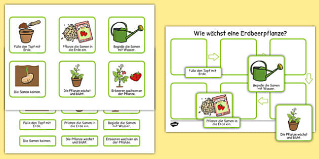 Plant Growth Sequencing Activity German - german, plants, flowers, grow, growing