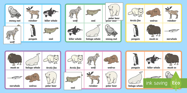Polar Animals Bingo - The Arctic, Polar Regions, north pole, south pole, explorers