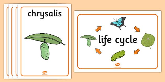 Life Cycle of a Butterfly Display Posters - Butterfuly, life cycle, lifecycle, display, banner, poster, caterpillar, egg, knowledge and understanding of the world, investigation, living things