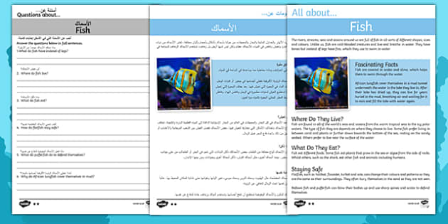 Fish Differentiated Reading Comprehension Activity English/Arabic