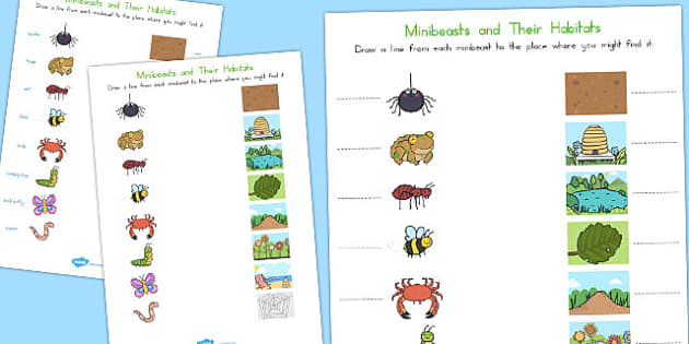 Minibeast and Their Habitats Worksheet - australia, minibeast