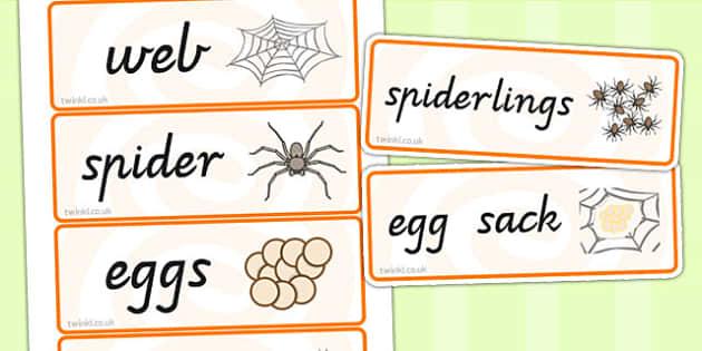 Spider Life Cycle Word Cards - life cycles, visual aid, keywords