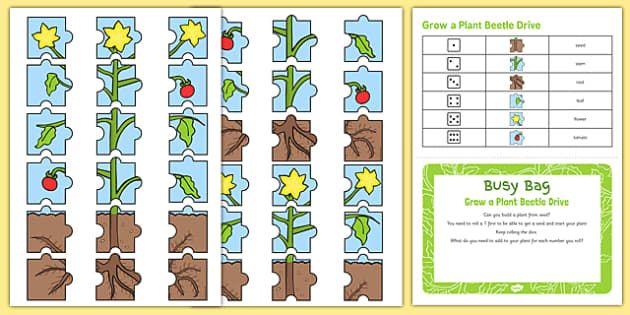 Grow a Plant Beetle Drive Busy Bag Prompt Card and Resource Pack - growing, growth, beanstalk, dice, number, counting, number recognition