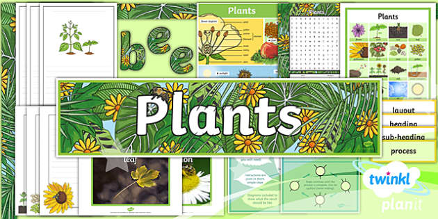 PlanIt Y3 Plants: Jack and the Beanstalk Additional Resources