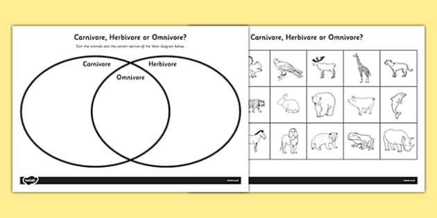 Omnivore Carnivore or Herbivore Venn Diagram Sorting Worksheet
