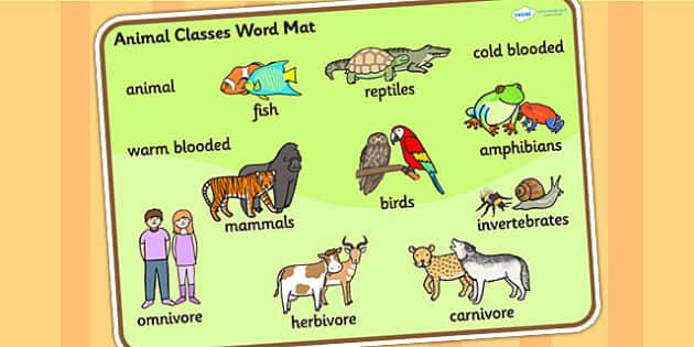 Animal Classes Word Mat - animals, animal classes, word mats