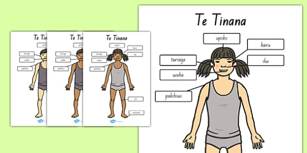 Parts of the Body A4 Head and Shoulders Te Reo Māori - nz, new zealand, literacy, writing, words, colouring, body, me, myself, science, ourselves, words