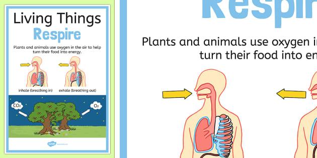 Living Things Respire Display Poster - australia, living things, respire, display poster, display, poster