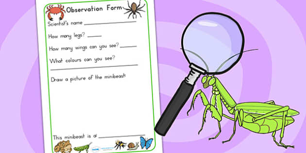Minibeasts Investigation Lab Observation Form - roleplay, props