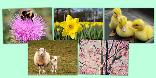 Spring Photo Clip Art Pack - sprint, photo, clip art, pack, clip