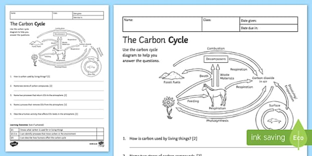 carbon cycle worksheet Termolak – Carbon Cycle Worksheet