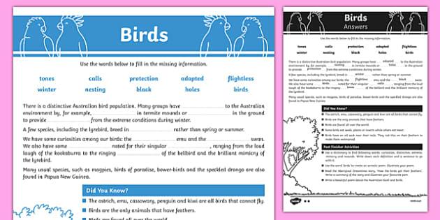 Australian Animals Years 3-6 Birds Differentiated Cloze Passage Activity Sheet - australia, Australian Curriculum, animals, birds, differentiated, cloze, fast finisher, information, reading, worksheet