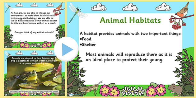 Animal Habitats PowerPoint - powerpoint, power point, interactive, powerpoint presentation, animals, animal, habitats, habitats presentation, habitats powerpoint, habitat powerpoint, habitat, presentation, slide show, slides, discussion aid, discussi