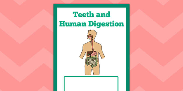 Teeth and Human Digestion Book Cover - teeth, human, digestion