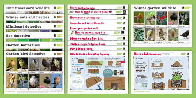 The Wildlife Trusts Activity Card