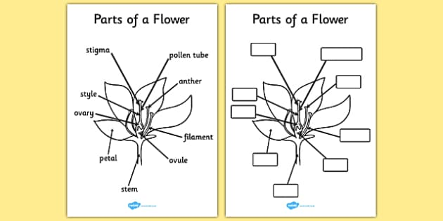 Parts of a Plant and Flower - Plant, Growth, Topic, Foundation